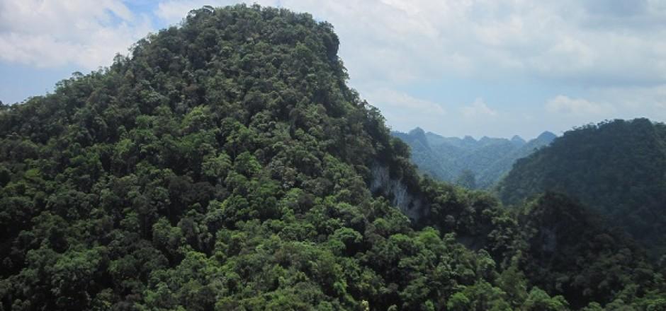 Kim Hỷ còn là nơi lưu giữ một số nguồn gien quý hiếm của các loại thực vật đặc hữu