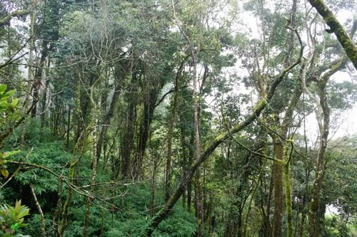 khu bảo tồn thiên nhiên Mường Nhé