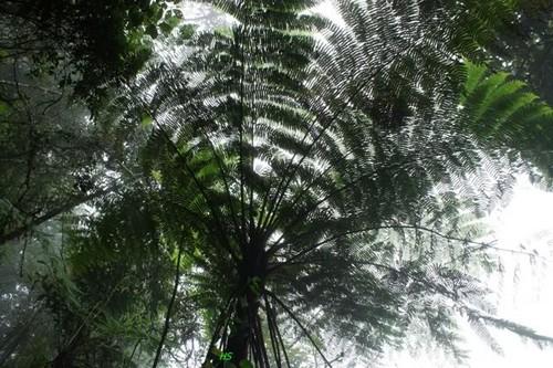 hệ thực vật phong phú
