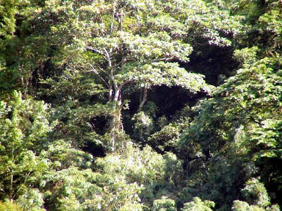 rừng phân bố tập trung với diện tích lớn (trên 7.000 ha)