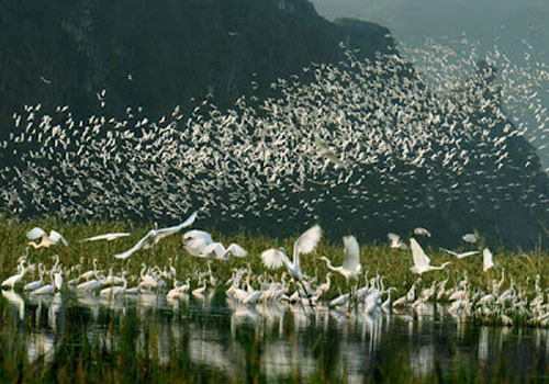 Những cánh cò trắng bay vụt lên bầu trời