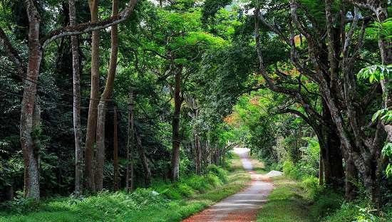 Lối đi trong Vườn quốc gia Ba Vì.
