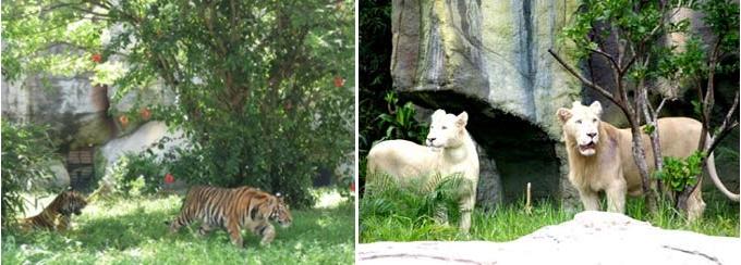 Một trong những điểm hấp dẫn của khu du lịch Đại Nam là vườn bách thú 22 ha dạng mở
