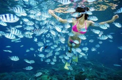 Du khách có thể lặn xuống để hòa mình vào làn nước và những chú cá tuyệt đẹp