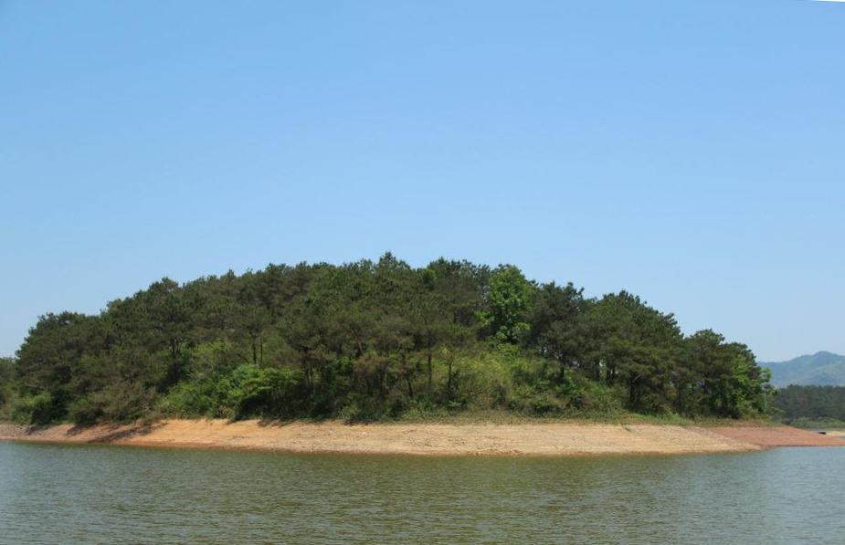 Đảo thông giữa hồ, một trong những điểm nhấn của cuộc hành trình khám phá