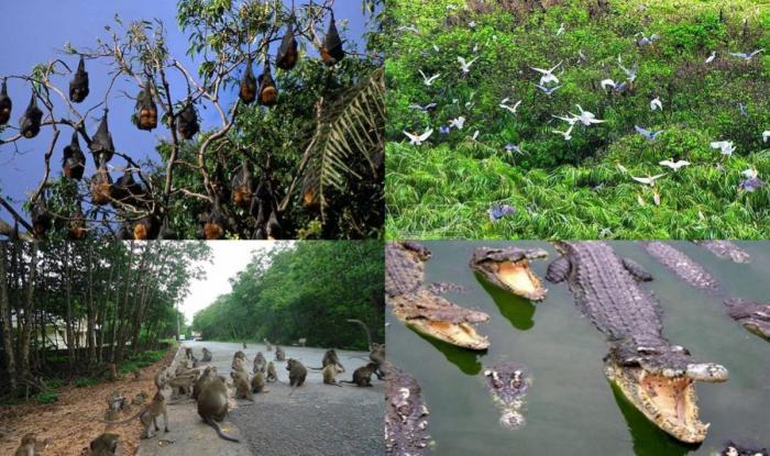 Một số loài động vật quý của rừng ngập mặn
