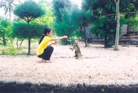 Du khách chơi đùa với những chú khỉ