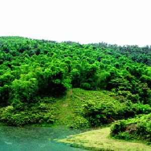 rừng nguyên sinh giữa vùng trũng nước.