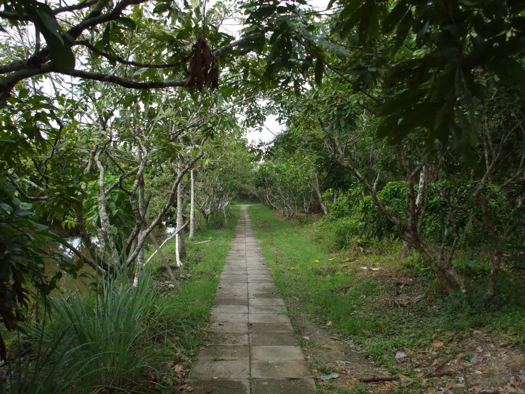Con đường râm mát trong khu sinh thái