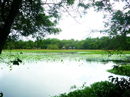 Hồ nước mênh mông với những cây dây leo chằng chịt