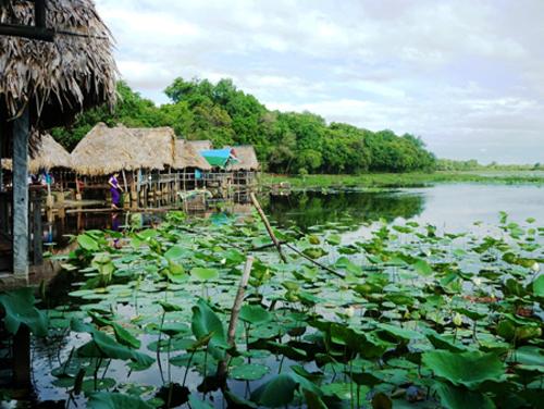 Hồ Sen Trằm Trà Lộc