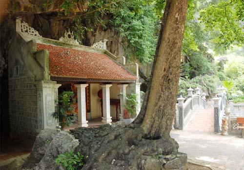 Phủ Khống và cây thị ngàn năm tuổi