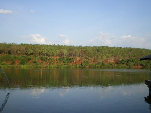 Mặt hồ yên ả được bao bọc bởi rừng cao su xanh bạt ngàn...