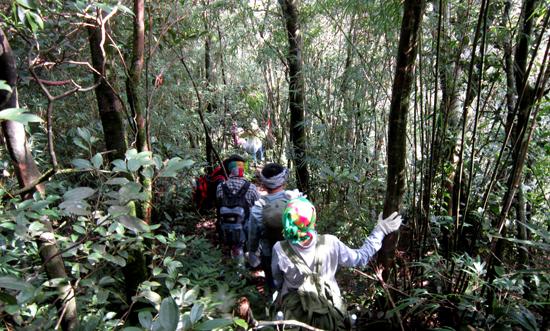 Trekking Tam Đảo 2 và Đỉnh Rùng Rình.