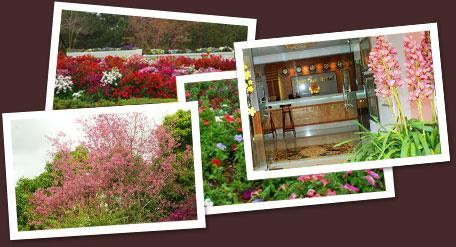 Khu du lịch nghỉ dưỡng - Khách sạn Minh Tâm