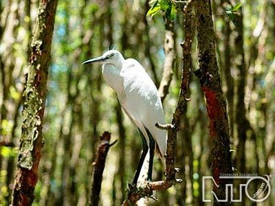 Nhiều loài chim quý