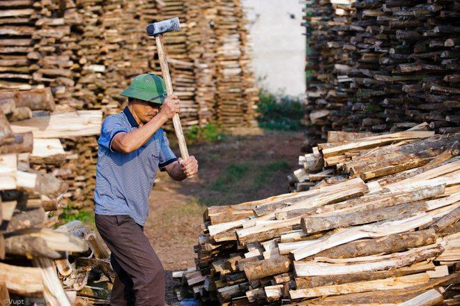 Các cây củi gỗ to dùng để đốt lò nung gốm được người dân Phù Lãng chẻ nhỏ, chất thành đống lớn và phơi khô tự nhiên trong mưa nắng