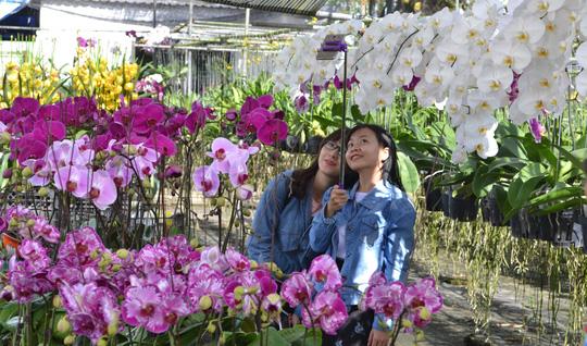 Du khách thích thú chụp ảnh trong các vườn hoa ở Sa Đéc.