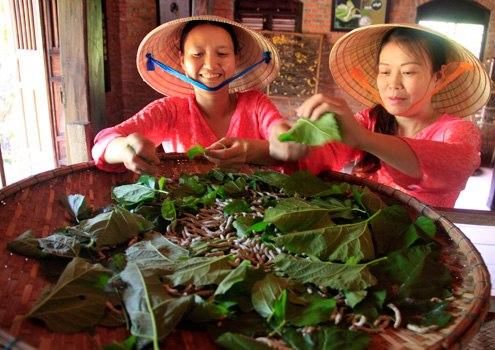Nguyên liệu dệt lụa rất đặc biệt, với cây dâu Đa của người Chăm Pa cổ tìm từ vùng núi cao của Quảng Nam về trồng trong vườn của làng để làm thức ăn cho tằm vàng nhả kén.