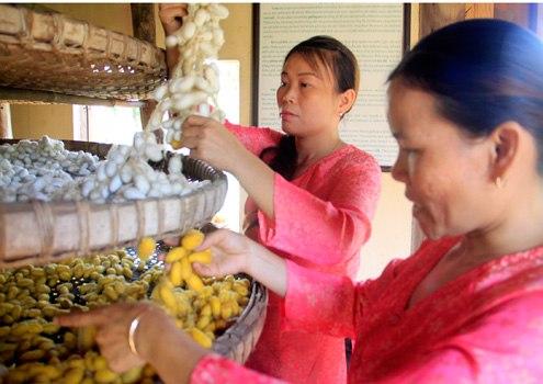 Đây là nguồn nguyên liệu hiệnchỉ có ở làng lụa này, không trùng lặp với nguyên liệu được nhập về từ Trung Quốc.