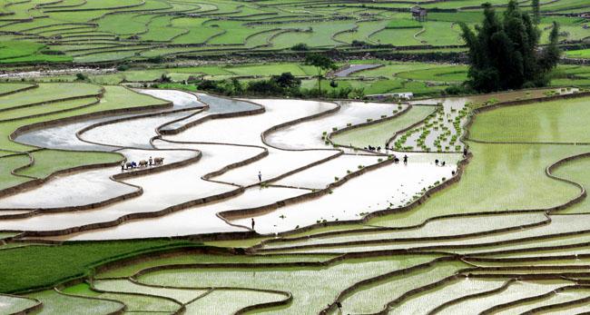 Mù Căng Chải mùa nước đổ