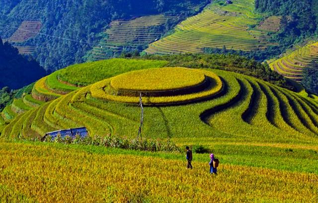 Ruộng bậc thang La Pán Tẩn - Điểm du lịch Mù Căng Chải hấp dẫn.