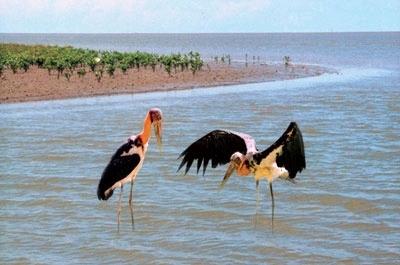 Các loài chim đua nhau về kiếm ăn