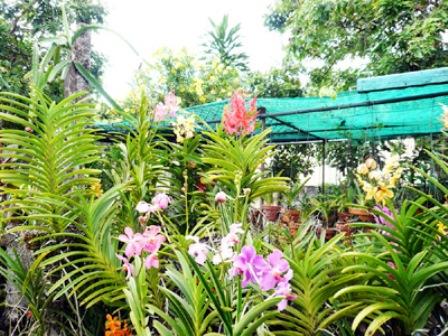 Vườn lan rực rỡ sắc màu