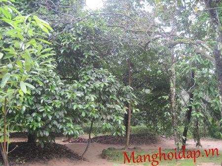 Ngoài giá trị kiến trúc, An Hiên còn là bộ sưu tập hiếm hoi và công phu các loài cây ăn quả, các loài hoa trong nước.