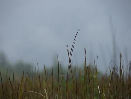 Hơn 10h sáng, đỉnh Chứa Chan vẫn chìm trong sương.