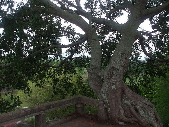Cây cổ thụ trên Thủy Đài Sơn