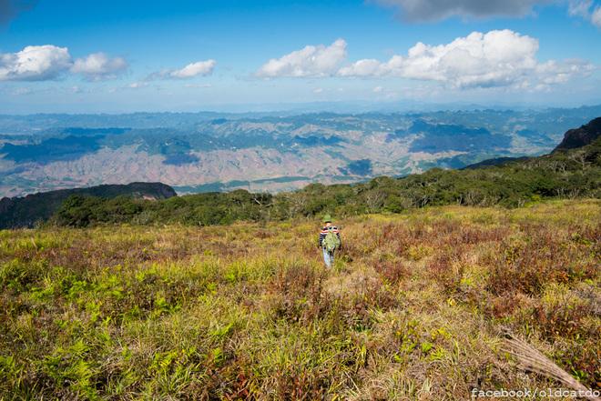 Phía trên đỉnh là cả một vùng đất bằng phẳng rộng lớn với đủ loại cây cỏ.