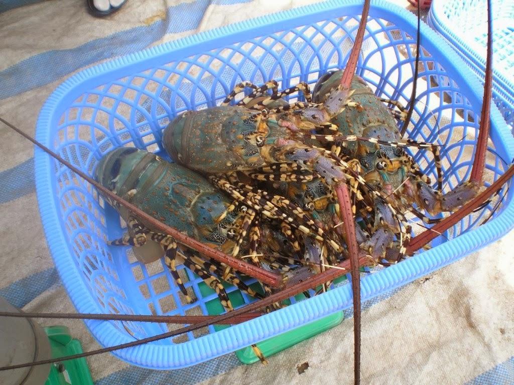 Hải sản tươi sống Phan Rang