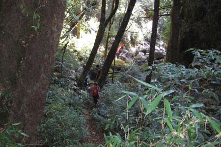 Nhóm leo núi phải xuyên qua rừng đại ngàn.