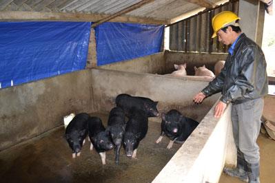 Tăng gia chăn nuôi
