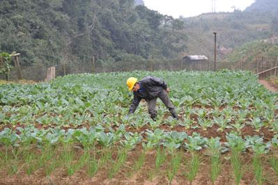và trồng rau xanh để cải thiện bữa ăn cho cán bộ, công nhân.