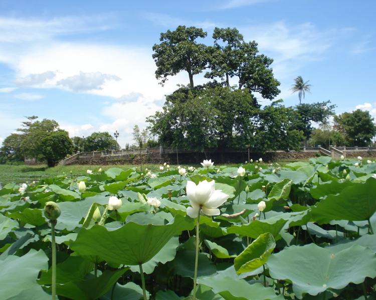 Hồ Tịnh Tâm.