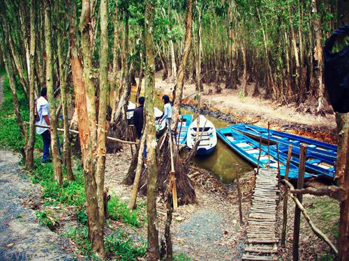 Một số hình ảnh của rừng Tràm Sư