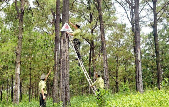 Hiện tại rừng được chăm sóc dưới sự quản lý của kiểm lâm