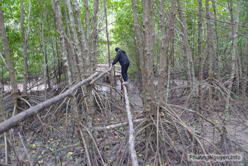 Rừng đước - nơi người dân sinh sống và bảo vệ rừng