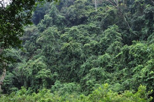 phong phú về thảm động thực vật quý hiếm, với nhiều loại cây gỗ quý