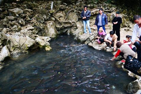 Điểm du lịch hấp dẫn: Suối cá thần Cẩm Thủy.