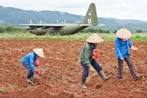 Người dân xã Tân Hợp trồng ngô và lạc, tận dụng những khu đất rộng rãi trong sân bay