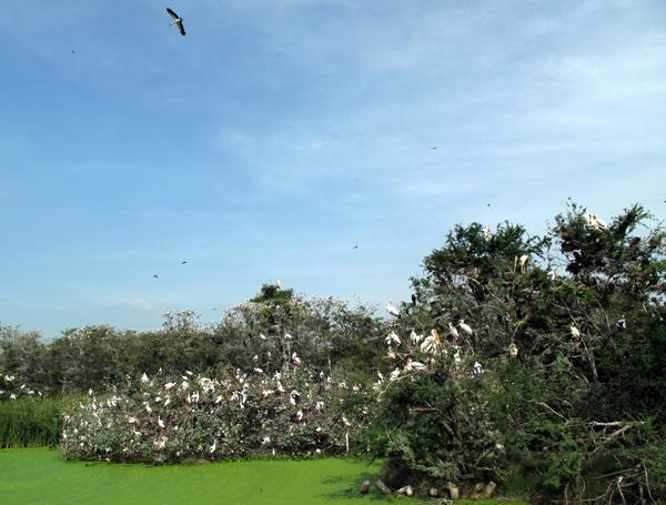 Đây là một trong những sân chim tự nhiên lớn nhất nước