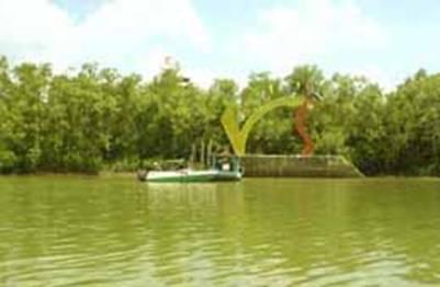 Khu du lịch sinh thái sân chim Vàm Hồ – Ảnh nguồn saigontoserco.com