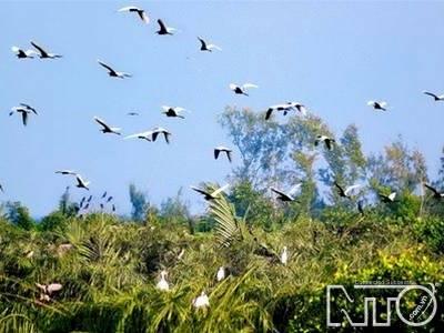 Sân chim Vàm Hồ – Ảnh nguồn nto.com.vn
