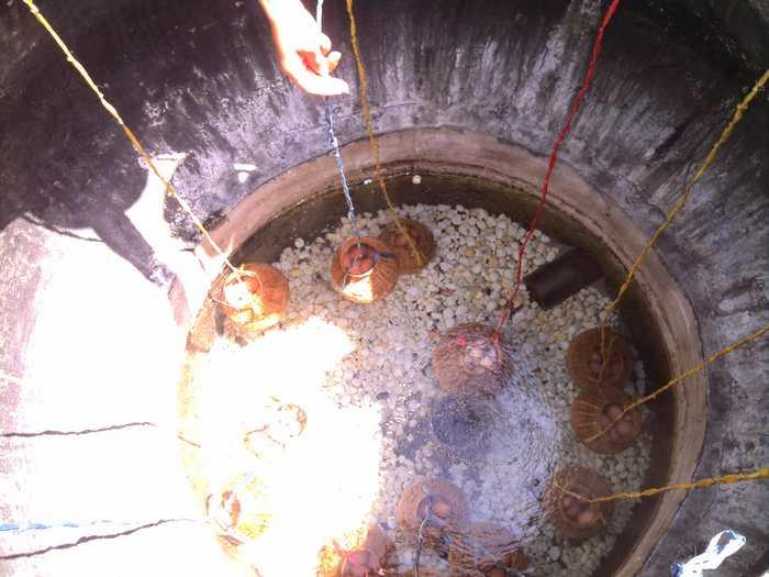 Luộc trứng bằng hệ thống nước khoáng nóng 82ºC