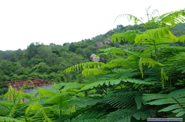 Phong cảnh hữu tình và yên tĩnh
