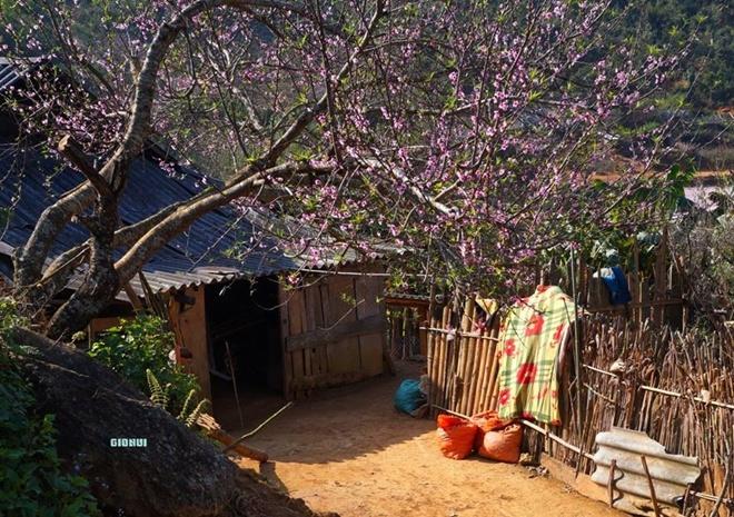 Tà Xùa mùa hoa đào nở