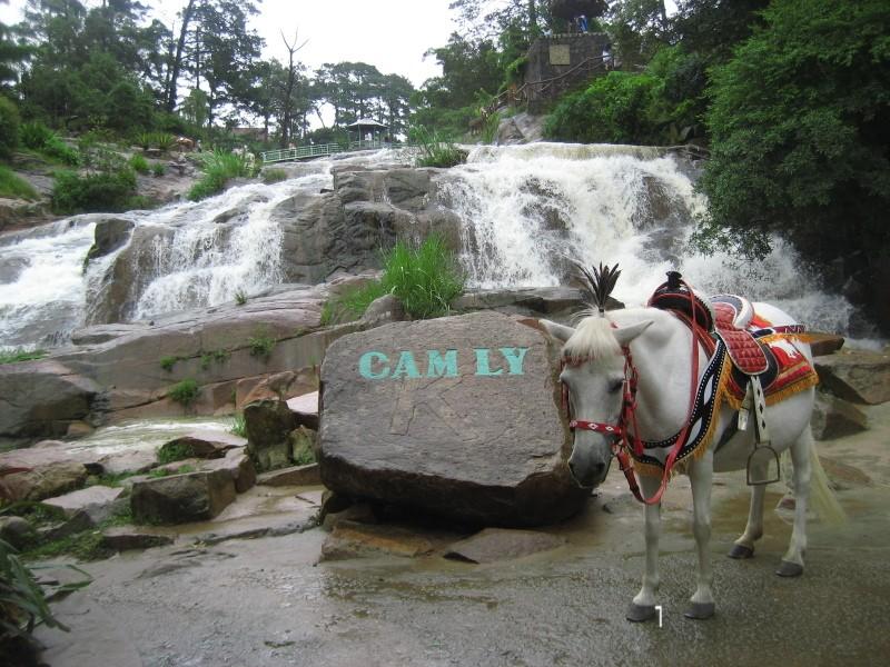 Chú ngựa mang nhiệm vụ đưa du khách đi thăm quan thác Cam Ly
